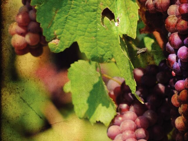 Vineyard Church Bulletin